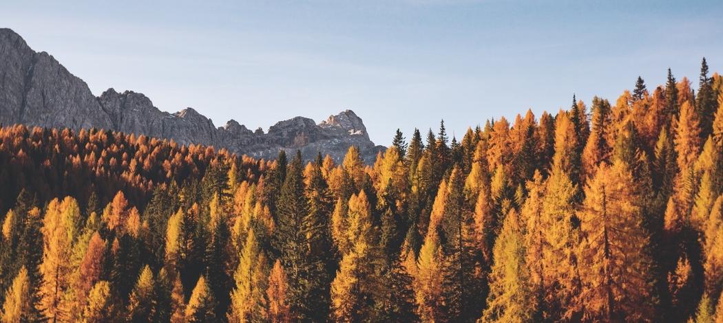 To Autumn - Poem Analysis